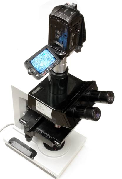Canon HF200 video camera with C-mount adapter in use on a microscope trinocular